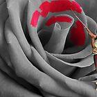 Rose Painter by Gregoris Panayiotou AFIAP