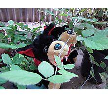 RnR gardening in blackberries Photographic Print