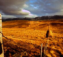 Golden Fence by seanseen
