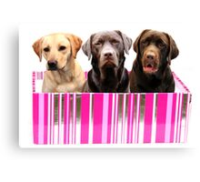 Labradors in a box Canvas Print