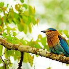 Spring would not be spring without bird songs. by Ritu Lahiri