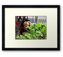 RnR gardening the spinach, tomatoes and herbs Framed Print