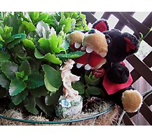 RnR gardening and meeting the Fairy Photographic Print