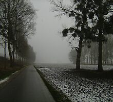 Bike path along trees with mistletoe by Ireentje