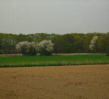 Flowering trees in a meadow by Ireentje