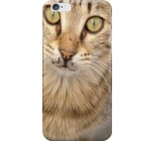 Eye Contact With A Stray Tabby Cat iPhone Case/Skin