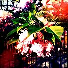 Gorgeous Florals hanging over a garden fence.  by ShellyKay