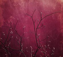 Daring Pink by Priska Wettstein