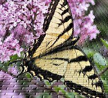 Butterfly In Craquelure by Deborah  Benoit
