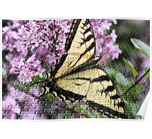 Butterfly In Craquelure Poster