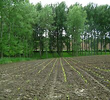 rows of green before rows of trees by Ireentje
