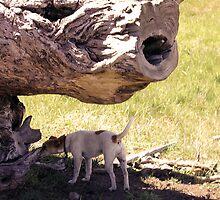 Daff Dog by HaRaKiRi
