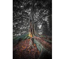 Banyan Trees Pt 2 Photographic Print
