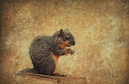 Mr. Nutmeg by Bonnie T.  Barry