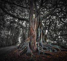 Banyan Trees Pt 1 by DavidMelville