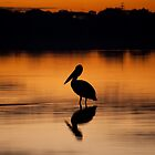 Pelican Sunset by Briarah1969