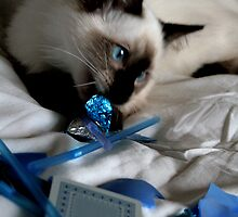 Sparkle Blue 2009 by Cathie Brooker