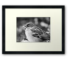 SPARROW (grayscale) Framed Print