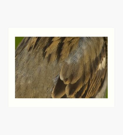 Feathered Abstract Art Print