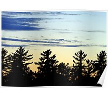 Tree Silhouette Sunset Poster