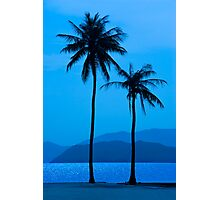 Palms in Blue Photographic Print
