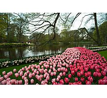 Tulip Lake  Photographic Print