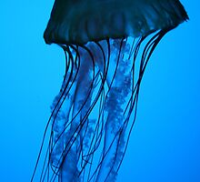 Blue Jelly by Isabelle Lafrance