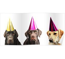 dogs in party hats Poster