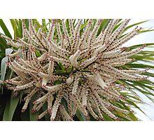 Palm Blossom Photographic Print