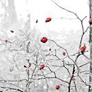 Rubies by Milos Markovic