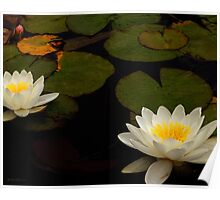 Capistrano Water Lilies Poster