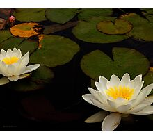 Capistrano Water Lilies Photographic Print