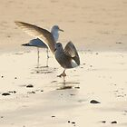 Dancing Seagull by Photodx