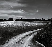 _ country road _ by Louise LeGresley