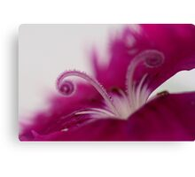 Dianthus (stamen) Canvas Print