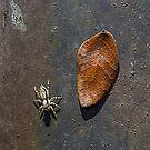 Little Spider by mrfriendly
