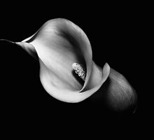 Calla #4 helix DNA by clickinhistory