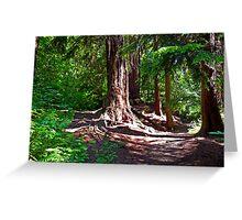 Schmitz Forest  Greeting Card