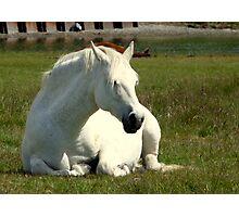 White Unicorn Sunbathing Photographic Print