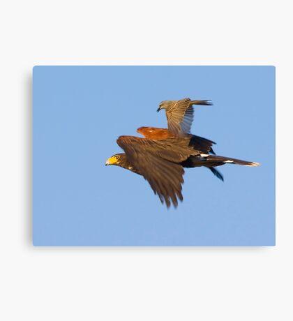 Tough Little Bird Canvas Print
