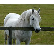 White By the Fence Photographic Print