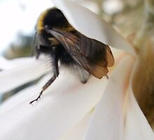 Bee at the Magnolia by Tinyevilpixie1