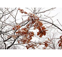 Ice Leaves Photographic Print