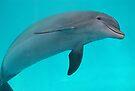 Dolphin by Sandy Keeton