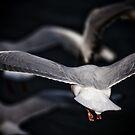 Flock by Mark van den Hoek