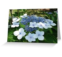 French Hydrangea Greeting Card