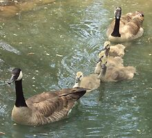 Mother Goose by kalizoomba