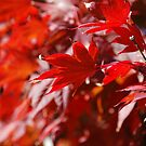 More Autumn! by Catherine Davis