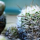 Cactus #1 by NicoleConrau