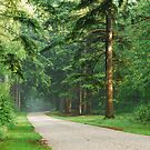 Cyling path or forest road – there is beauty and peace to find on each of them here. by jchanders